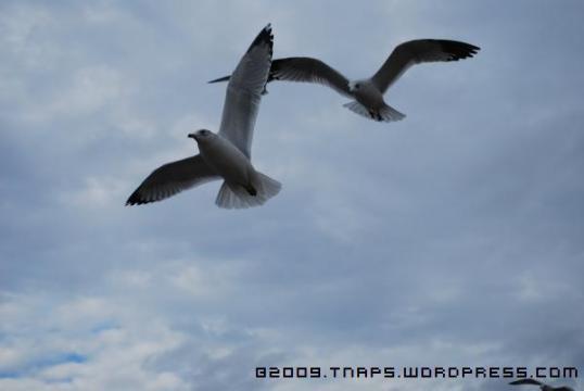 fbirds